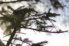 Morning Twigs (Jonny Cairns) Tags: sunlight nature 50mm early glare lensflare twigs f1450mm