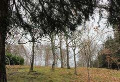 Monte Corona (Isabel Castro Ahedo) Tags: rboles invierno cantabria robles montecorona bosqueatlntico