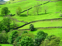 Green Pastures (Sandra Leidholdt) Tags: green pastures sheep pastoral walls stone stonewalls lakedistrict lakecountry england uk english trees grasmere cumbria northwestengland british countryside britain greatbritain greengrass greengrassofhome landscape grass unitedkingdom