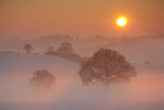 Winter Sunrise (Tracey Whitefoot) Tags: nottingham morning trees mist snow misty sunrise dawn golden glow head arnold tracey nottinghamshire calverton whitefoot dorket
