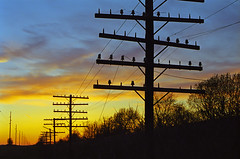 Silhouette of a Railroad Pole Line (monon738) Tags: old railroad abandoned electric pentax decay telephone indiana railway powerlines electricity telegraph ruraldecay defunct insulator pz10 pennsylvaniarailroad electricpower glassinsulator pentaxpz10 poleline coesseindiana smcpf2880mmf3547