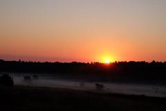 Good morning! (RW-V) Tags: fujifilmxe2 fujinonxf1855mmf2840rlmois tleesten hetleesten bos wald woud woods fort forest morning morningglory sunrise sunshine misty mist eenmistigedag fog brouillard nebel beautiful sun summer apeldoorn gelderland nederland niederlande paysbas thenetherlands sooc 80faves 100faves