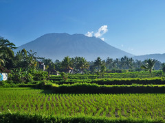 Nuansa Pedesaan (BxHxTxCx (using album)) Tags: bali gunung mountain sawah ricefields