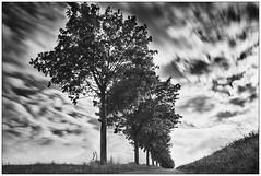 Clouds (in Motion) #2 (Wayne Interessiert's) Tags: landschaft landscape paysage wolken clouds nuages himmel sky ciel monochrome bw black white noirblancphoto langzeitbelichtung longtimeexposition longuedeexposition baumgruppe smalwood bosquet leefilters leebigstopper