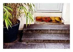 pas de porte (Marie Hacene) Tags: paris crmieux tapis plante rue street