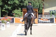 IMG_7616 (dreiwn) Tags: dressage dressur dressuur pferd reitturnier turnierreiten pferdesport horse horseback horseriding equestrian reitverein dressurprfung kandare doublebridle reiten pferde reitplatz ridingarena