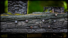 Charred, burnt. (CWhatPhotos) Tags: cwhatphotos burnt burn charred wood wooden fence nail nails head dof depth field green old view photographs photograph pic pics photo photos images image foto fotos that have which contain with canon 5d mk iii eos dslr sacriston county durham summer august 2016 time 100mm prime lens