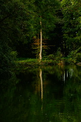 ###### (vieubab) Tags: arbres atmosphre bois branchage branches calme couleurs extrieur escapade eau tang fort feuillage feuille rivage sonyflickraward luminosit lumire lac nature unlimitedphotos paysage reflets saveearth sony verdure vert