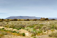Green Fileds with a Mountain looking like Table Mountain in the background Tankwa Karoo (markdescande) Tags: africa wind dry natural cape nature dawn south background karoo road outside geology gannaga african sky environment valley stone path grass scenic landscape sunset tankwa twist rises fog eastern outdoor clouds arid desert dusk gravel sun blue ravine rock geological pass cloud sunrise mist wild park nobody misty national mountain