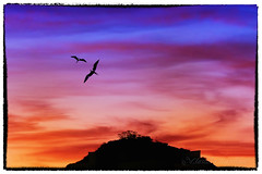 IMG_6410_edit (cnajhar) Tags: city mountain sky sunset birds