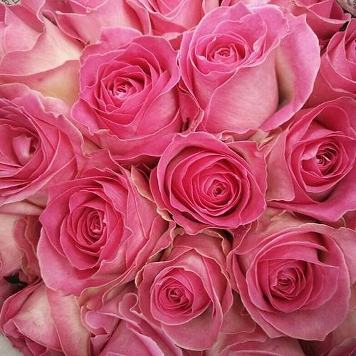 Bunga Mawar Pink Duo Mawarpink Bungamawar A Photo On Flickriver