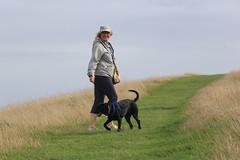 Ridgeway Walk (alasdair massie) Tags: sarah dog labradorpointercross holiday labrador scarpa vizler uffington ridgeway chalk downland