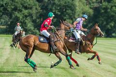 IMG_0798 (ElsSchepers) Tags: belgianpolotrophy lions hasselt polo paarden horses