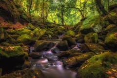 DSC_8205-Edit (Stuart Lilley Photography) Tags: hathersage england unitedkingdom gb padleygorge landscape landscapes wood woods forrest forrests autumn autumnal water stream streams