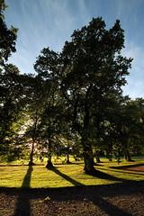 Pitmedden Garden - Aberdeenshire (PeskyMesky) Tags: pitmeddengarden pitmedden aberdeen aberdeenshire scotland lowsun flickr tree shadow canon canoneos500d