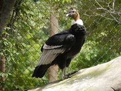 P2230468 (Gareth's Pix) Tags: aviarionacionaldecolombia baru colombia aviario bird