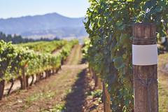 DSC00872-4800 (westonde) Tags: winery vineyard rokkor minolta grapes oregon forestgrove
