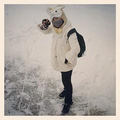 โคโยตี้หิมะ #ป้อมฮวาโย