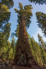 General Sherman (dlee723) Tags: park national sequoia