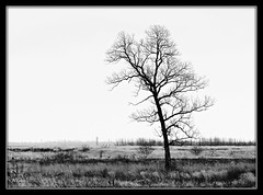All The Leaves Are Gone (MEaves) Tags: winter blackandwhite bw tree nature mono illinois solitary flatlands ruralamerica k20d pentaxk20d pentaxart