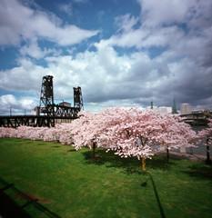 pink powderpuffs: poststravaganza #16 (manyfires) Tags: pink trees oregon portland spring blossoms pinhole bloom pacificnorthwest sakura pdx steelbridge pnw willamette cherrytrees waterfrontpark