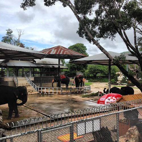 #thai #thailand #pattaya #tour #teztour #travel #crocodile #farm #stone #garden #zoo #2555 #autumn #rainseason #rain #season