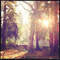 igers #iphone #iphone4 #iphoneonly #jj_forum #instadaily... (Victor Hernandez Photography) Tags: trees forest jj ucr sunflare iphone joshjohnson vdh iphone4 thisiscalifornia iphonephotography iphoneography igers iphoneonly hipstamatic instagram statigram jjforum instadaily jjchallenge instagramhub instagood uploaded:by=flickstagram jamesfavourites instagram:photo=58680434323031