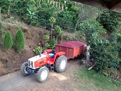 Costa Rica Finca De Licho 2013 Harvest