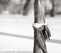 Resolve (dina bennett) Tags: winter snow cold tree nature scarf warmth wrap bark urbannature wishes