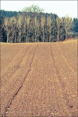 20121210_4073 (rowteight) Tags: autumn trees field soil agriculture autumncolour ploughedfields economicactivity