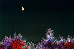 (psychedelic world) Tags: moon art forest mond kunst psychedelic wald wohltorf lohe psychedelicworld