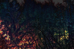 (psychedelic world) Tags: art forest psychedelic wald wohltorf lohe psychedelicworld