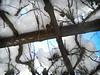 grappoli d'uva sotto la neve (cuginAle) Tags: la explore neve sotto 465 duva grappoli flickrandroidapp:filter=berlin 26012013