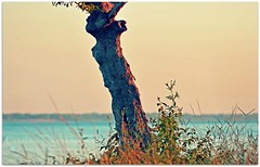 Un amanecer en la rivera... (..Cecilia..) Tags: argentina rio colores amanecer corrientes tronco texturas rivera vegetacin hierbas roparana sudmaerica troncohueco coloresdelamanecer primeraslucesdelamaana