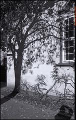 Sol og skugge (Halvor Skurtveit) Tags: shadow sun tree sol norway norge shadows olympus bergen om tre hordaland noreg skygge skuggar skugge skygger