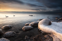 Morning Calm (timcorbin) Tags: winter ontario ice sunrise canon swans whitby leefilters