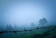 misty wire (Ashwin ravishankar) Tags: india ooty moody landscape blue monsoon trees environment canon600d