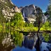 Trees Lining a View to the Merced River (Yosemite National Park)