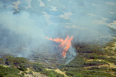 Wildfire (kyleddsn) Tags: ogden utah wildfire waterfallcanyon