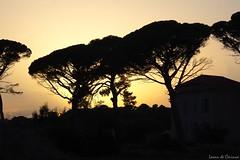 Crépuscule Varois (Loran de Cevinne) Tags: crépuscule pentax var provence pinparasol ombres ombre tamaris tamarissurmer
