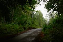 sur la route (vieubab) Tags: arbres atmosphre bois branchage branches chemin extrieur escapade fort feuillage feuille fougres sonyflickraward luminosit nature unlimitedphotos paysage plante saveearth sentier sony sapin troncs verdure