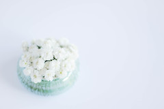 233/366: Just a little green (judi may) Tags: 366the2016edition 3662016 day233366 20aug16 52weekchallenge 52in52 stilllife flowers white whitebackground green littlegreen gypsophila negativespace lessismore minimal minimalism simplicity simple canon7d 50mm