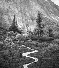 Miniature Meanders {Explored} (Darren Umbsaar) Tags: mountains mountain mount narao peak yoho national park bc british columbia stream water curve meander river creek flow trees tree forest rocks rocky rockies canada canadian miniature mini grass alpine environment landscape black white