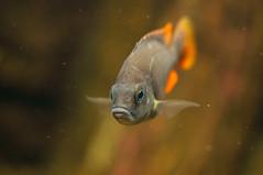 Acuario Agosto 2016 (05) (Fernando Soguero) Tags: acuario zaragoza acuariodezaragoza aragn turismo aquarium nikon d5000 fsoguero fernandosoguero