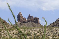 Mule Ears (Alfred J. Lockwood Photography) Tags: alfredjlockwood nature landscape ocotillo rockformation muleears bigbendnationalpark nationalpark afternoon spring texas clouds chihuahuandesert