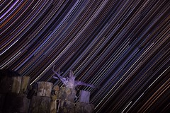 Bunnies are evil. Also some star trails with wood. (RS2Photography) Tags: starswood canon california dslr outdoor outside trails stars colours startrails starstreaks nature wood