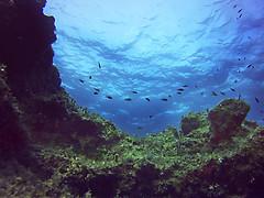 under water life (Michaela Unbehau Photography) Tags: comino island malta under water life sea aqua diving photography colors world amazing diveshack