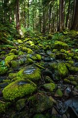 Sol Duc Valley (James*J) Tags: rock stone green douglas fir moss creek river pacific northwest pnw washington wa sol duck valley soleduck rainforest