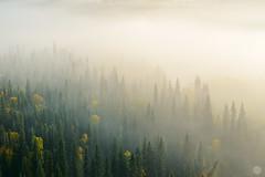 the nordic summer has come to an end ... (Sandra Bartocha) Tags: sandrabartocha nordic scandinavia lys spruce forest mist fog autumn fall