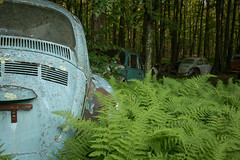 in fernal decay (rustyjaw) Tags: vw volkswagen cars abandoned automobiles decay rust woods forest ferns